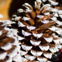 Simple Pinecone Decorations