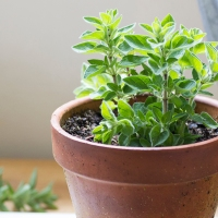 5 Foods You Can Grow in Your Apartment