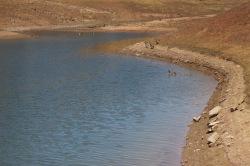 Goslings on Lake Berryessa